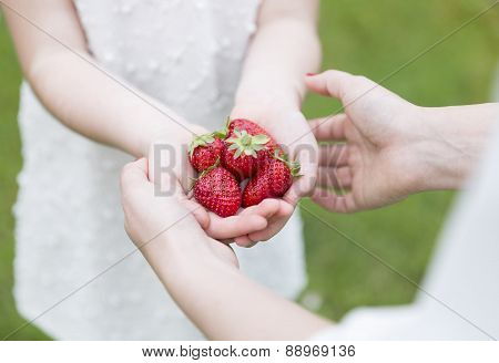 Hands Full Of Stawberries