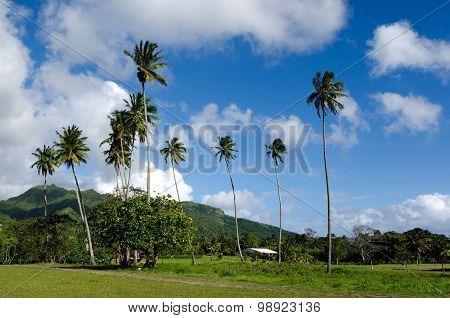 Landscape Of Rarotonga Cook Islands