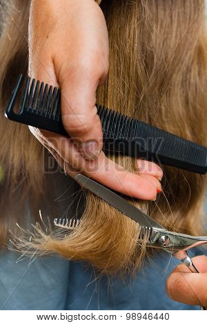 hand of hairdresser trimming hair with scissors closeup poster