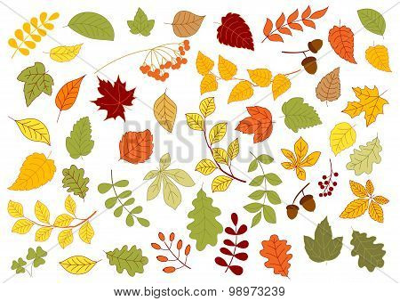 Maple, oak, birch, linden and herbs leaves