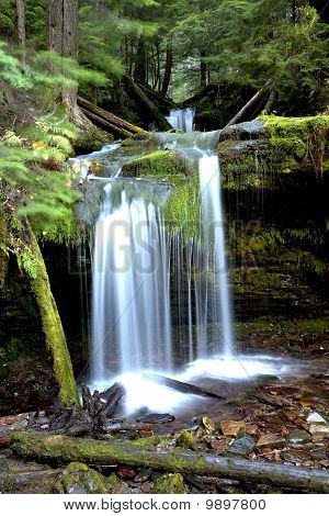 Lush forest at Fern Falls.