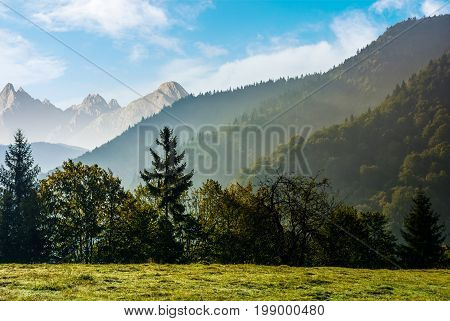 Forest On The Hillside Meadow In High Tatras