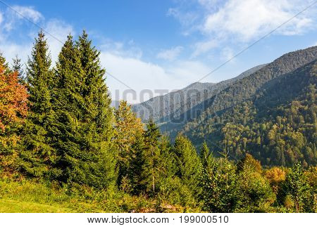 Forest On The Hillside In Carpathian Mountains
