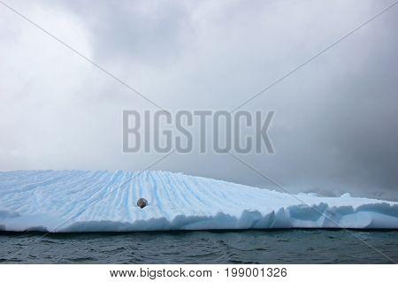 Beautiful iceberg or ice floe with a seal, Antarctic ocean, Antarctica
