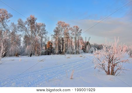 Pink twilight in the winter forest - beautiful winter landscape. Evening or morning sunlight painted hoarfrost-covered trees in gentle colors - a magical Christmas fairy tale