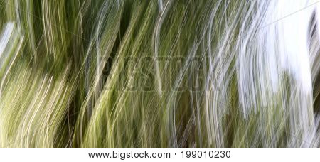 Technique in photography called panning, this time creating a  background from trees and sky in the forest.