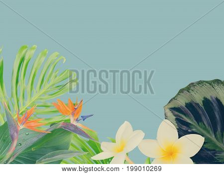 tropical flowers and leaves - border of strelizia bird of paradize flowers, frangipani and exotic palm leaves border on blue backgroundotic palm leaves on blue background