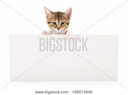 Pretty kitten peeking out of a blank sign isolated on white background