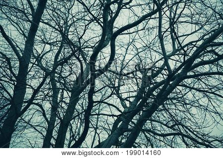 Bare Trees Over Cloudy Sky. Monochrome
