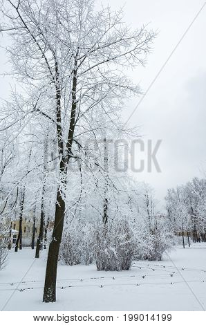 Trees Covered With Snow And Frost In Winter