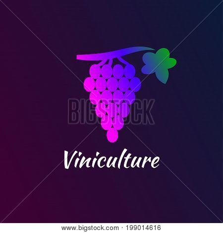 Gradient of grape bunch. Logo of winemaking. Color icon winery. Vector illustration