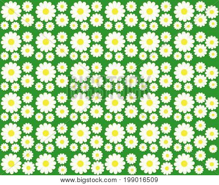Background with white chamomiles on a green background
