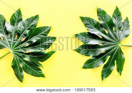 Pattern of exotic plant's leafs on yellow background top view.