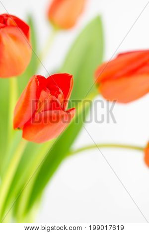 Close up of orange tulip flowers one bloom in focus and the rest blurred with copy space.