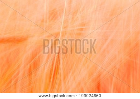 Blurred Red Abstract Background With A Predominance Of Lines