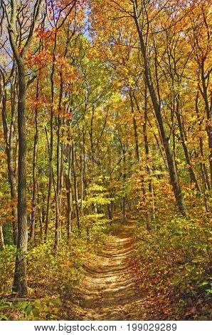 Shaded Trail in the Fall in Brown County State Park in Indiana