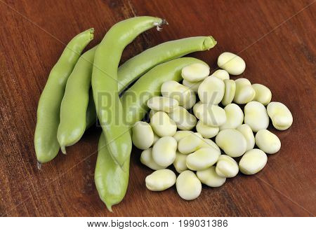 Freshly picked broad beans variety Witkiem Manita Vicia Faba also known as field beans fava bell horse windsor pigeon and tic beans.