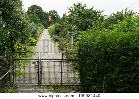 pathway with fence for allotment garden with bushes and trees
