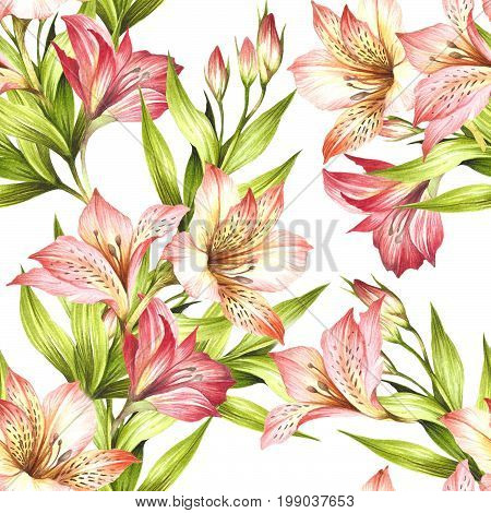 Seamless pattern with alstroemeria. Hand draw watercolor illustration.