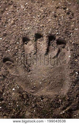 Handprint on freshly plowed soil outdoors in a field