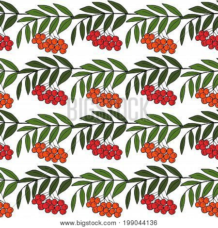 Detailed ink drawing of rowan or rowanberry. Berries and rowan berries with leaves, hand drawn in rustic design, classic drawing element of wild ash, pit or rowan-tree. Seamless pattern.