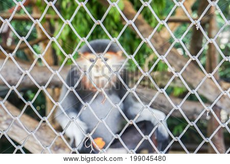 selective focus of animal cage with small Langur in zoo backdrop