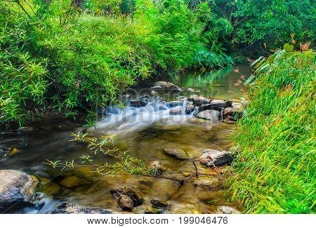 Forest river flow landscape, Forest river flow nature landscape