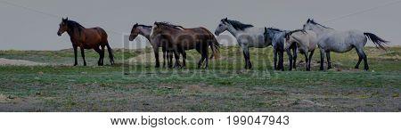 Wild horse herd in Theodore Roosevelt National Park North Dakota