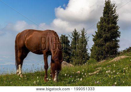 horse is grazing on a mountain pasture in the background of beautiful clouds