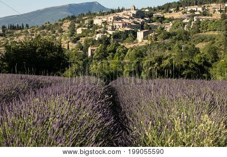 a lavender field with the village of Aurel beyond the Vaucluse Provence France