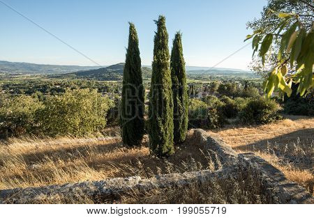 Three cypresses in in Saint-Saturnin-les-Apt Muehle in Provence France