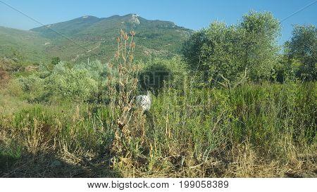 Landscape in Campania near Salerno on mountains