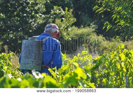 Man spraying a vineyard. Man spraying chemicals on grapes in vineyard