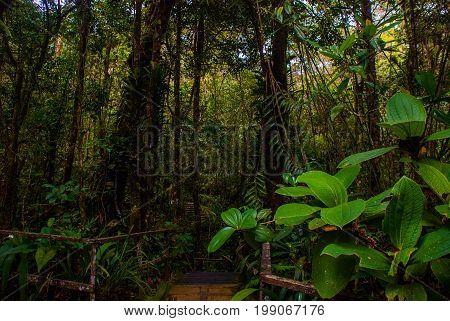 Tropical Rainforest Landscape, Sabah Borneo, Malaysia