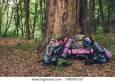 Active lifestyle. Hiking camping equipment backpacks lying in front of huge tree forest nature on background
