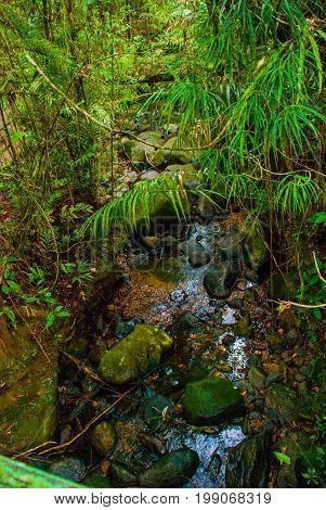 Stones And Stream. Tropical Rainforest Landscape, Sabah Borneo, Malaysia