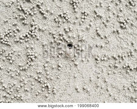 ghost crab created small sand balls while digging habitat, abstract art from animals on the beach, natural background top view