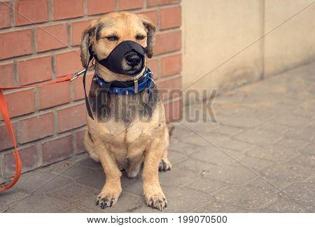 Sad Mongrel Dog Waiting For Owner