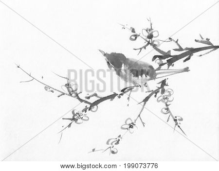 Spring bird on a cherry branch sumi-e ink painting. Traditional chinese painting