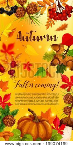 Autumn banner with pumpkin, fallen leaf. Fall season harvest pumpkin vegetable with orange maple foliage, forest mushroom, branch of acorn, rowanberry and briar berry, pinecone for autumn card design