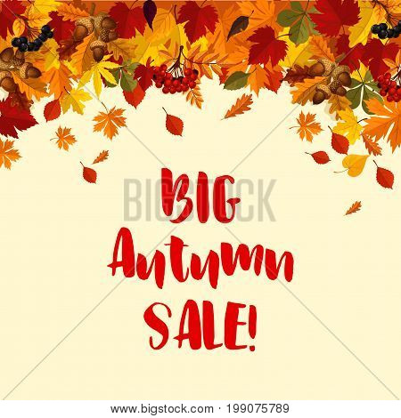 Autumn Big Sale poster template of falling leaves, oak acorns and rowan berries. Vector autumn foliage of maple leaf, birch or aspen and poplar for seasonal shopping discount offer design