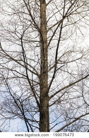 Leafless Tree Branches Against Overcast Sky Background