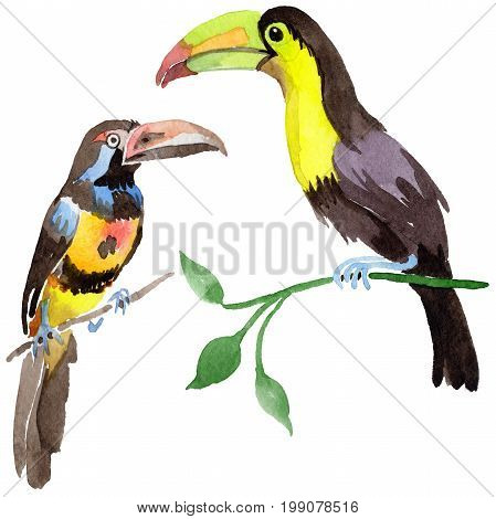Sky bird toucan in a wildlife by watercolor style isolated. Wild freedom, bird with a flying wings. Aquarelle bird for background, texture, pattern, frame, border or tattoo.