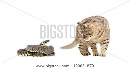 Cat and snake isolated on white background