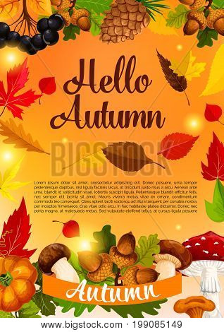 Hello autumn and fall season poster template. Autumn leaf, pumpkin vegetable, yellow and orange foliage of maple tree, forest mushroom, acorn, rowanberry and pine cone banner design with ribbon