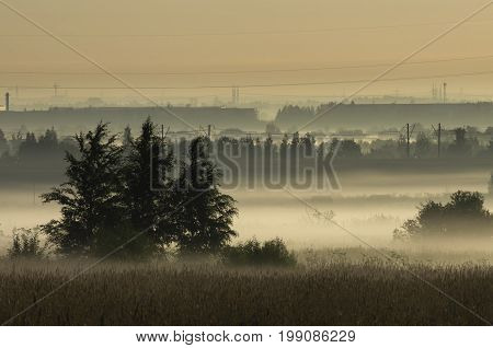 Coppice in the morning mist on the outskirts of the city in the background of power lines