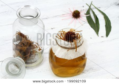Filtering tincture from flower heads of narrow leaf purple cone flower. Echinacea angustifolia the most medicinal from all Echinacea family