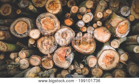 Closeup of Wood Logs Stacked Pattern Background