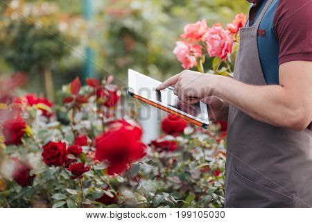 Partial View Of Gardener Using Digital Tablet While Standing In Greenhouse