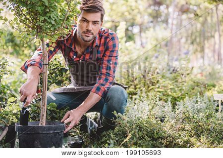 Young Gardener In Apron Planting Tree While Working In Garden